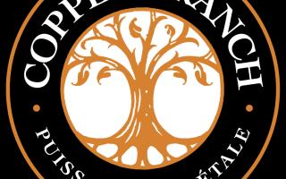Сеть вегетарианских ресторанов Copper Branch
